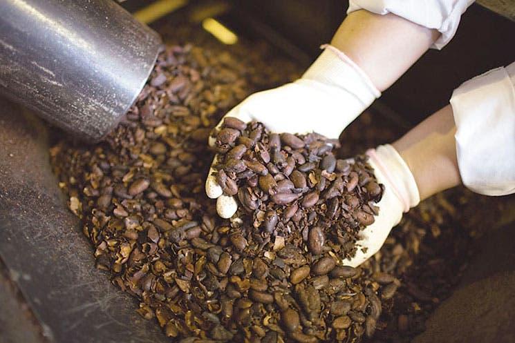 Ébola provoca posible alza en precio de cacao