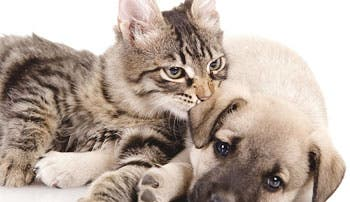 ¡Adopte una mascota!