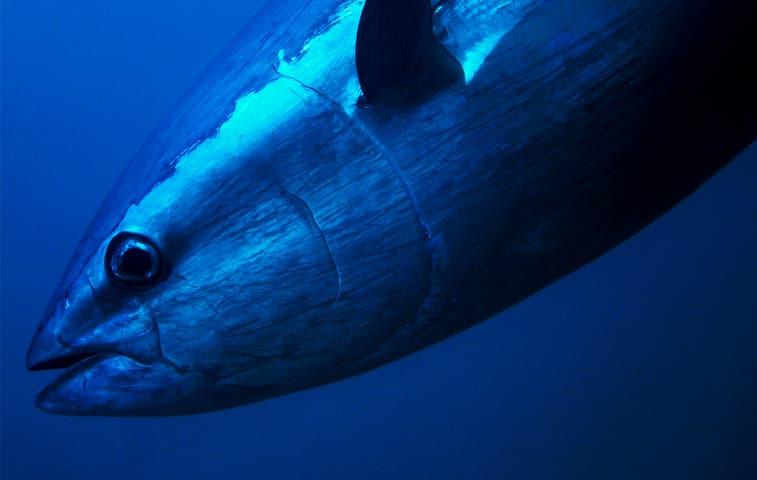 Gobierno define zonas de pesca atunera en el Pacífico