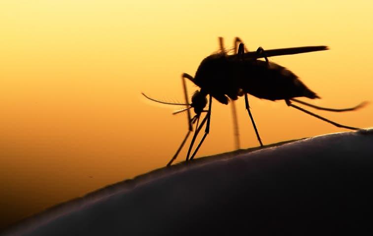 Incidencia de Chikungunya en el país se debate en Congreso Médico