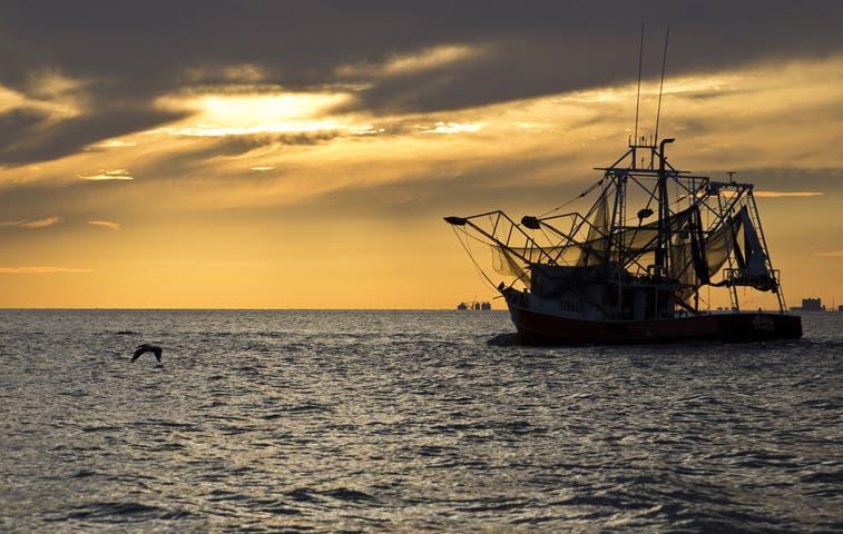 Entregarán al Gobierno plan para ordenamiento pesquero de camarón