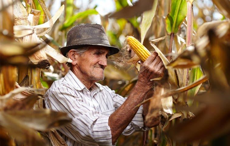 En el país hay más de 93 mil fincas dedicadas a la agricultura