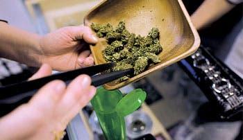 Legalización de cannabis en Francia aportaría 2.200 millones de euros