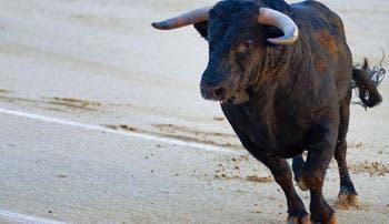 Atención a toreros pasa factura a la Caja por ¢9 millones