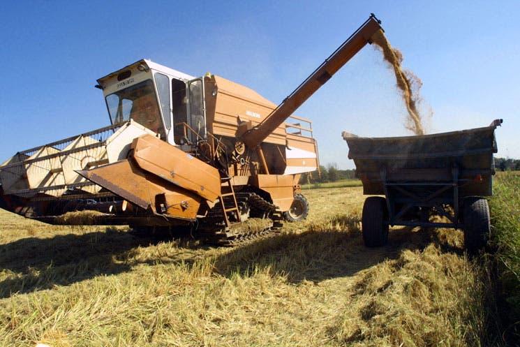 Argentina y Uruguay podrían reclamar ante la OMC por arroz