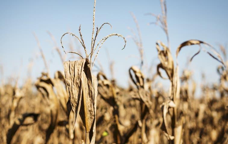 Más de ¢15 mil millones para combatir la sequía