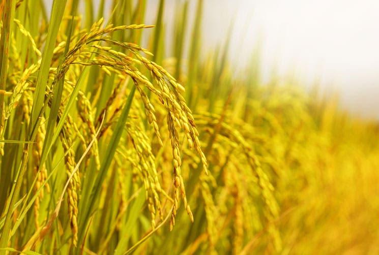 Empresas apelan alza en arancel al arroz importado