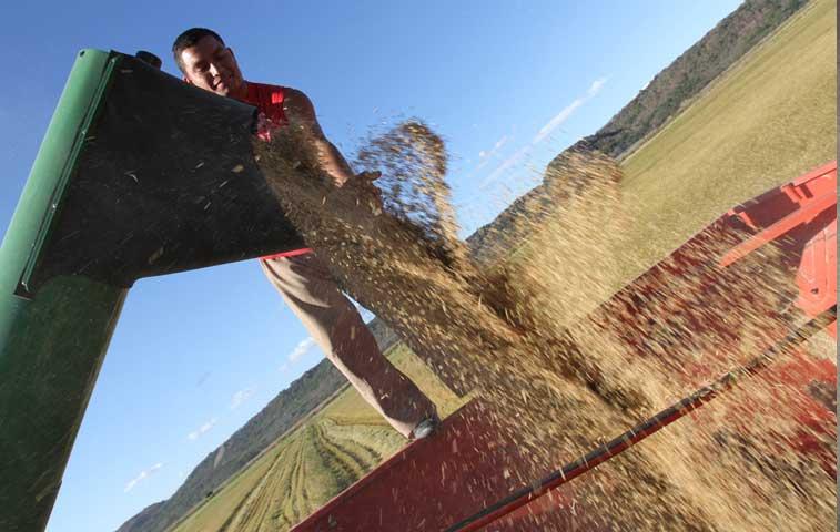 Proceso productivo del arroz tendrá más asesoría técnica