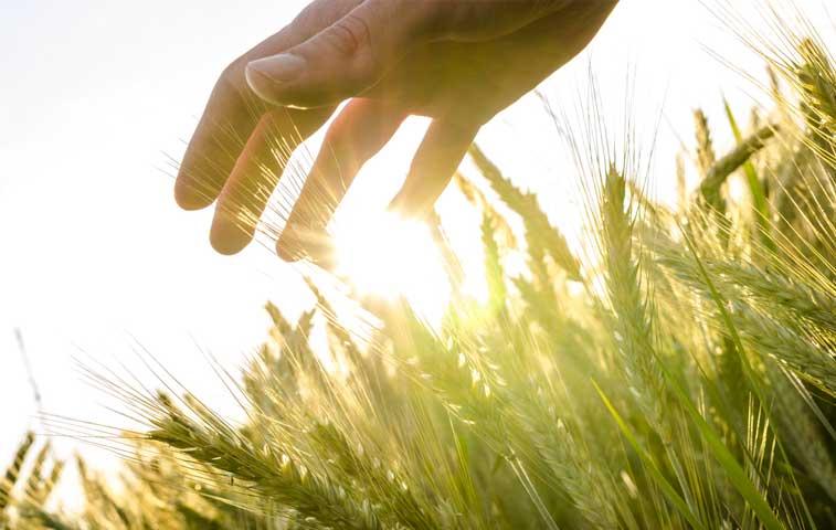 Proyecto busca anteponer cosechas nacionales a productos importados