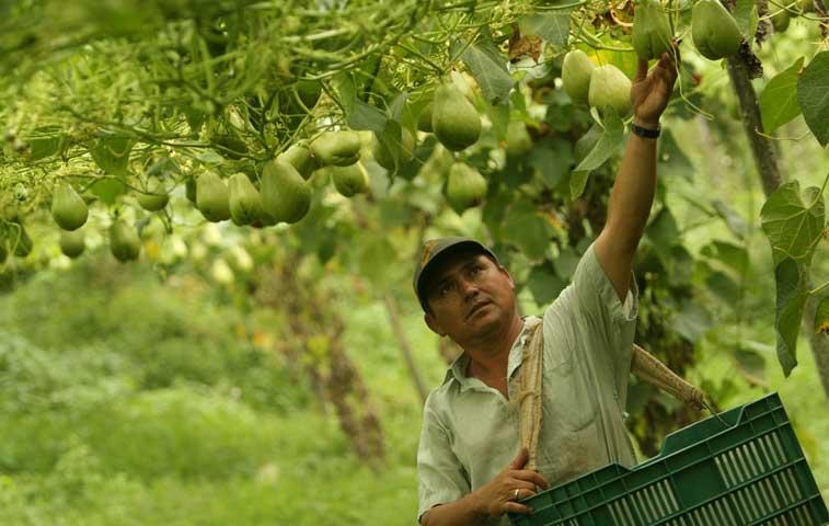 País promueve autogestión en zonas rurales de la mano de Japón