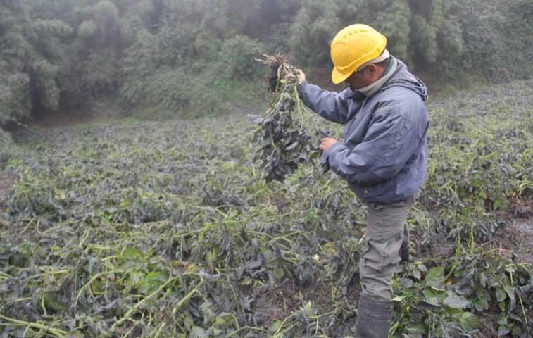Cenizas del volcán Turrialba amenazan vida de animales y agricultura