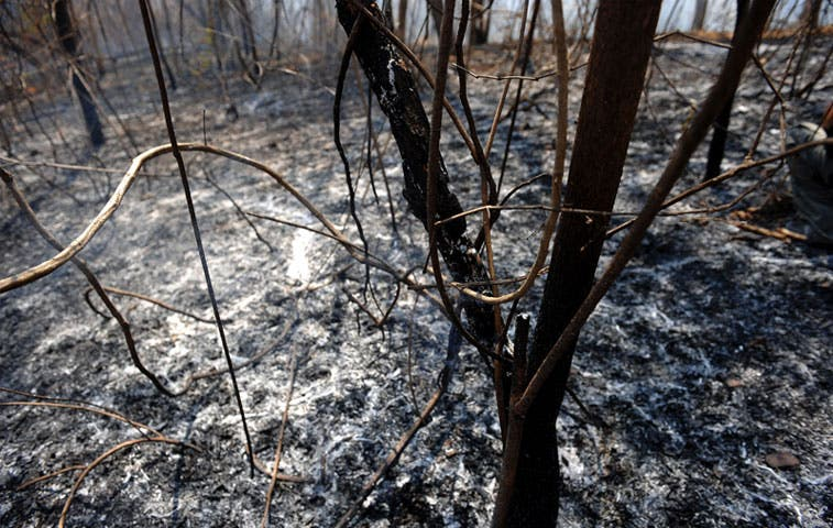 Áreas Silvestres Protegidas registran 19 incendios forestales