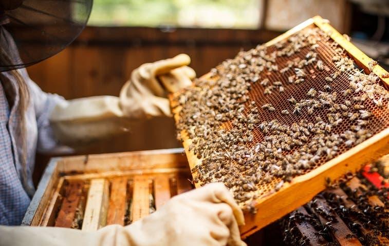 Producción de miel tica se sumará a red latinoamericana