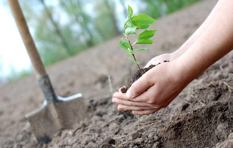 Inicia segunda encuesta trimestral en fincas agrícolas