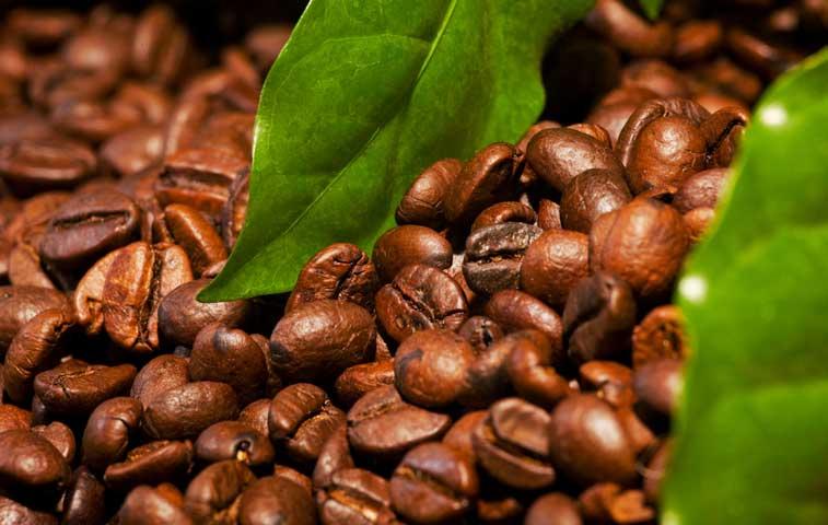 Productos orgánicos costarricenses se exportan a Estonia, Francia y Suiza