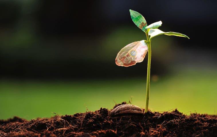 Microfranquicias buscarán crecimiento económico en La Carpio