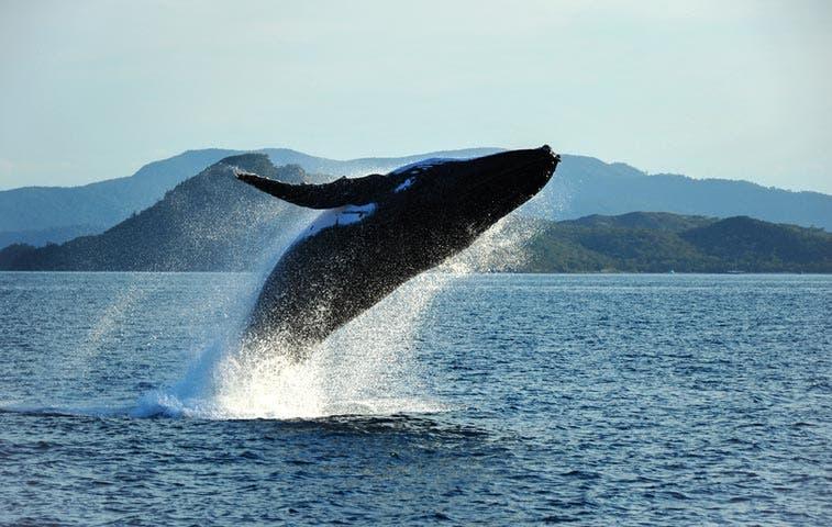 National Geographic postula a Costa Rica entre mejores lugares para avistar ballenas