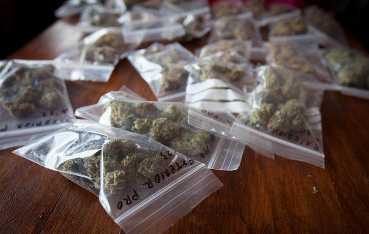 Academia de Medicina pide desechar proyecto de cannabis medicinal