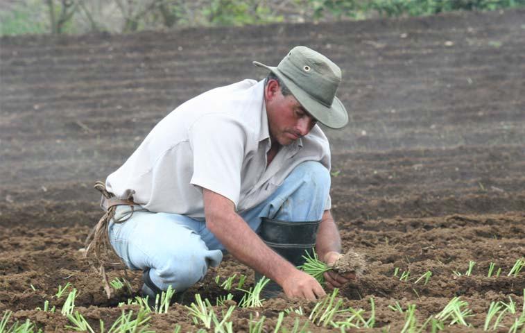 Sector agro con serios problemas productivos por lluvias
