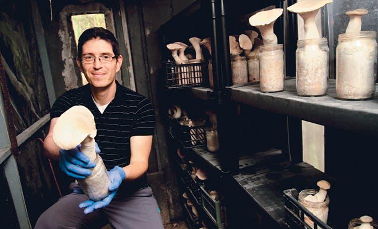 Pyme innova con hongos en Latinoamérica