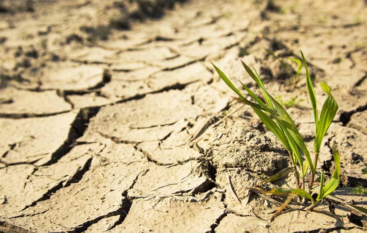 Productores chorotegas reciben¢1.740 millonespara combatir sequía