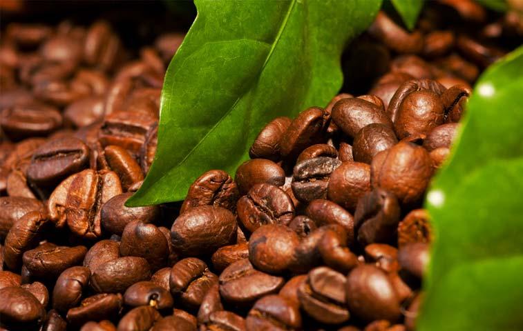 Proyecto en Guanacaste generaría energía a partir de desechos del café