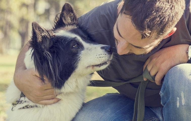 Proyecto de bienestar animal no fue convocado por gobierno