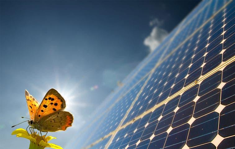 ICE adquiere 850 paneles para electrificación rural