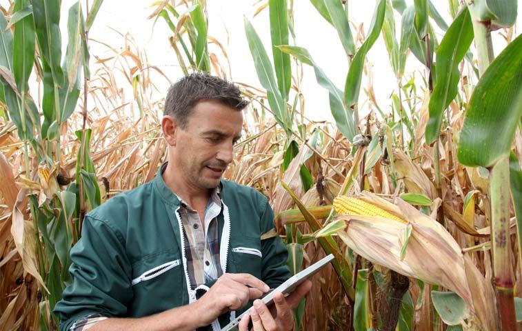 18 proyectos impulsarían empleo en zonas rurales