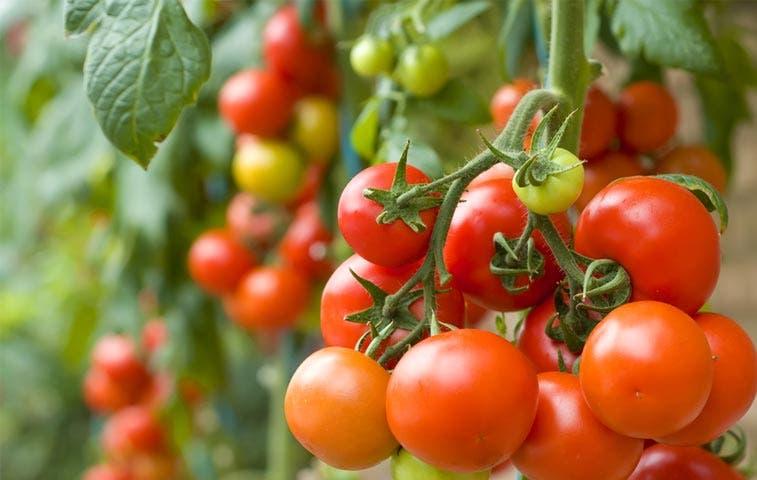 País aplica examen a políticas agrícolas para ingresar a OCDE