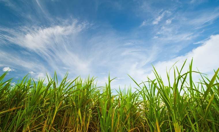 Sector agro mitigaría 1.254 mil toneladas de CO2 por año