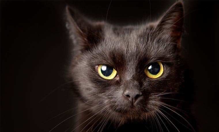 ¿Es usted supersticioso? ¿Es usted tonto?