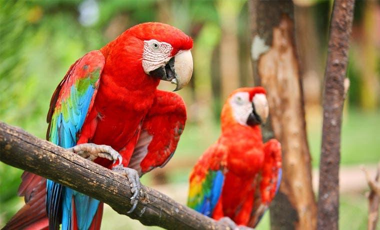Costa Rica y Estados Unidos firman acuerdo de conservación de vida silvestre