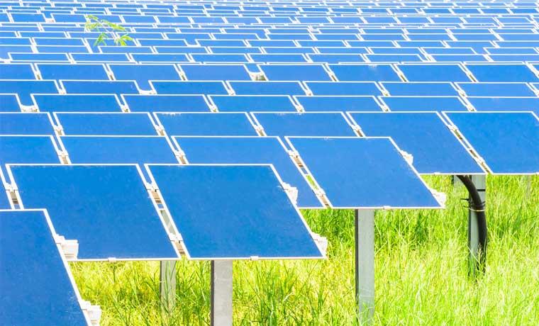 Empresas nacionales apoyan medio ambiente