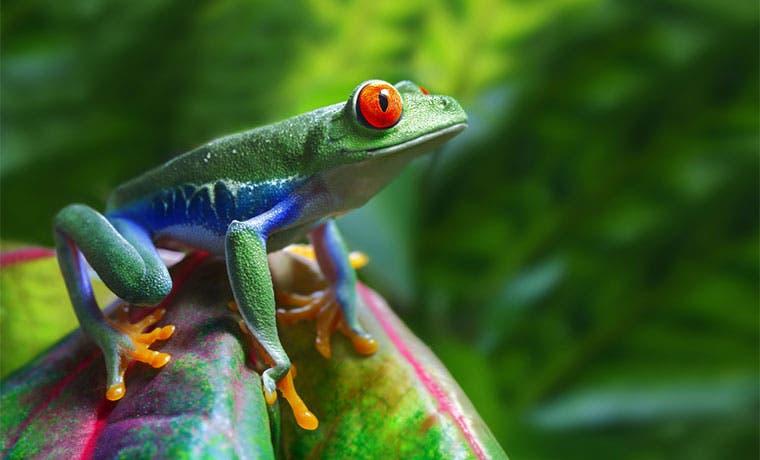 Costa Rica se devalúa como marca