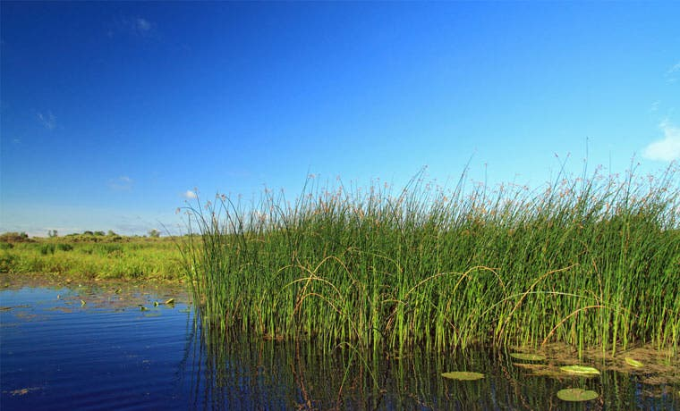 Carbono Azul Comunitario beneficiará manglares del Pacífico