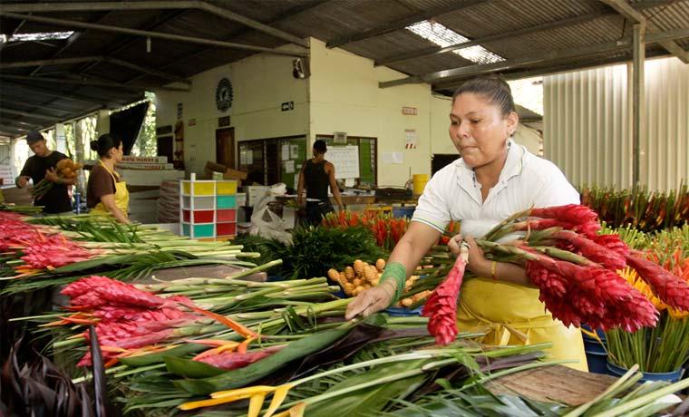 Empresas limonenses exportan jugo de caña y flores a Canadá