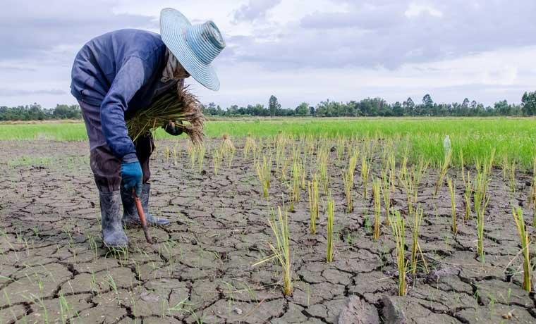 11 acciones mitigarían sequía histórica que enfrenta Guanacaste