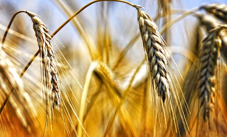 América Latina: mayor exportador neto de alimentos del mundo, según FAO