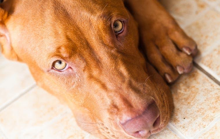 Estrenan programa de T.V. contra el maltrato animal