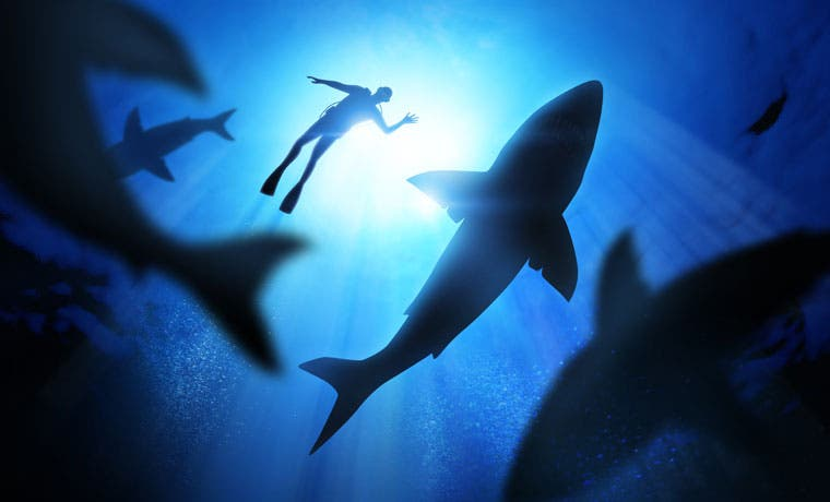 Gobierno rechaza nombramiento de Solís como enemigo de los tiburones