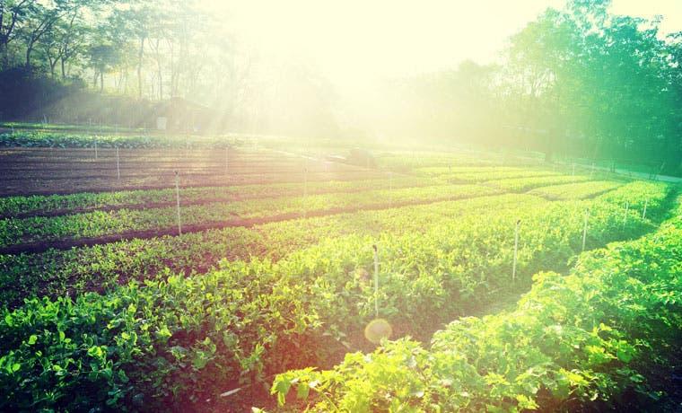Maquila Lama comprará cosechas de frijol a productores nacionales