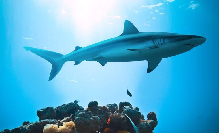 22 especies de tiburones y rayas incluidas en memorándum de conservación