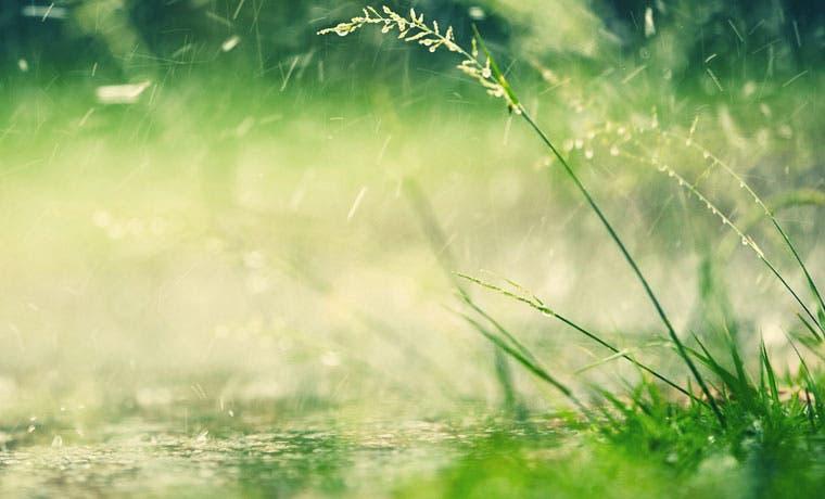 Pymes forestales recibieron ¢900 millones en crédito en el 2015