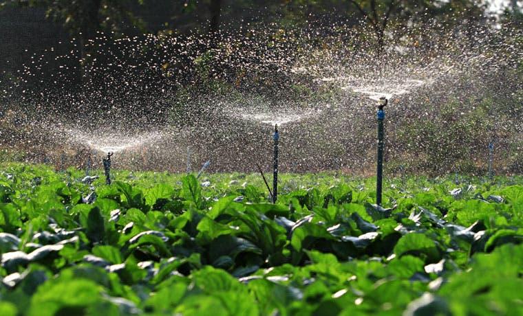 Gobierno impulsará 127 productores agrícolas en Cartago