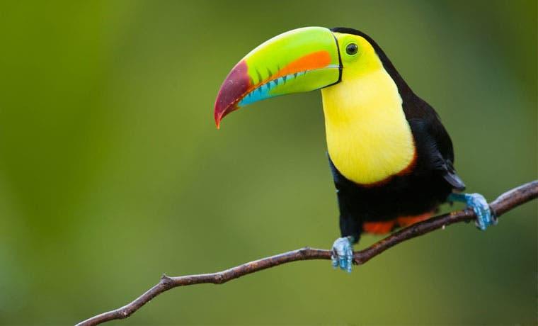 Festival de Aves le espera en Parque Nacional Palo Verde