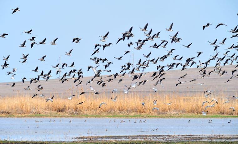 Osa será sede de Festival de Aves Migratorias