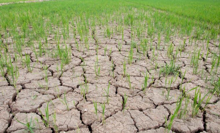 CNE asesorará empresarios y agricultores para enfrentar la sequía