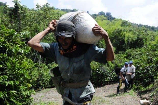 Sector cafetalero propone plan para mejorar condiciones a recolectores del grano