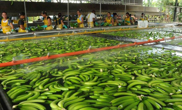 Corbana y Acorbat organizan el Congreso Internacional sobre Banano